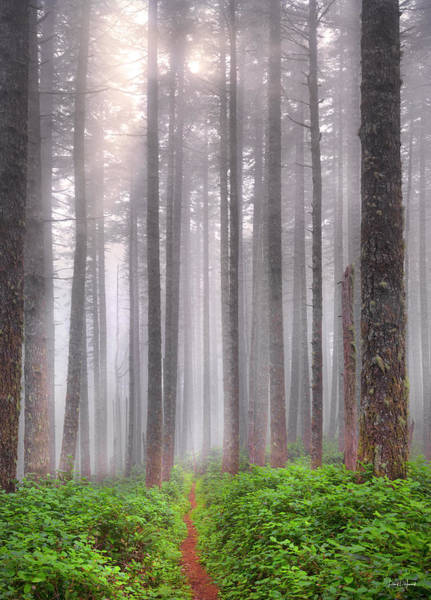 Photograph - A Path In The Forest by Leland D Howard