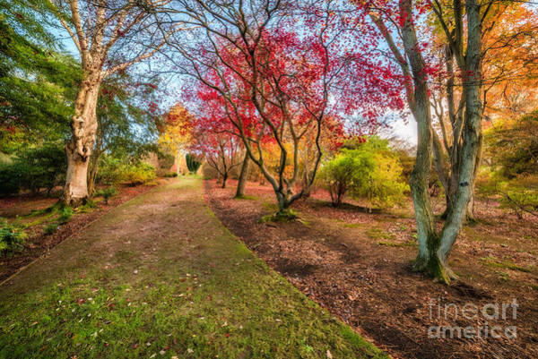 Photograph - A Path Into Autumn by Adrian Evans