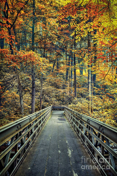 Poconos Wall Art - Photograph - A Path Into Autumn by Evelina Kremsdorf