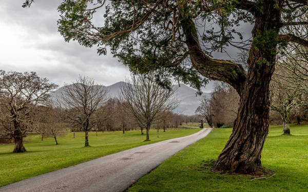 Irish Landscape Photograph - A Path Through The Park by W Chris Fooshee