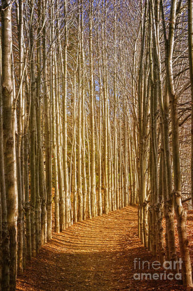 Photograph - A Pathway Through The Trees by Debra Fedchin