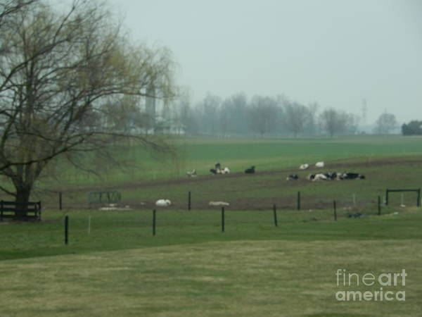 Photograph - A Peaceful Day On The Farm by Christine Clark