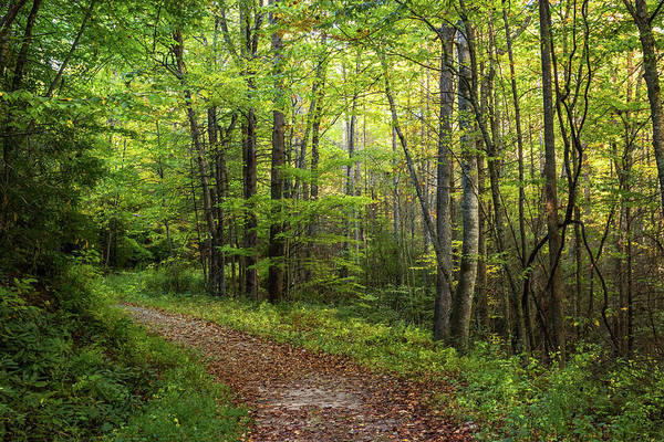 Photograph - A Peaceful Walk North Carolina by Terry DeLuco