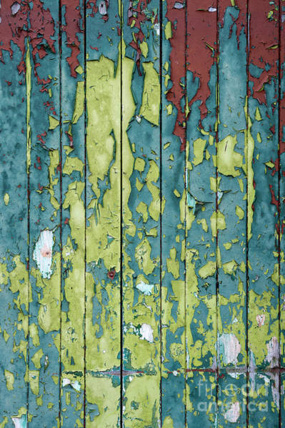 Peeling Paint Wall Art - Photograph - A Peeling by Tim Gainey