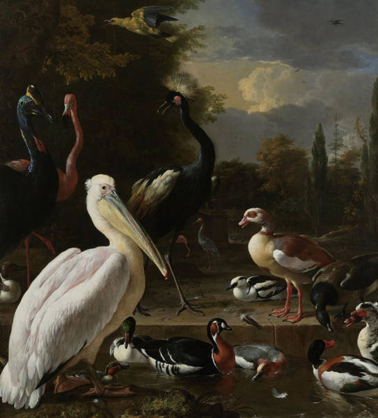 Floating Painting - A Pelican And Other Birds Near A Pool by Melchior de Hondecoeter