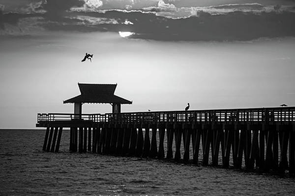 Photograph - A Pelican Dive-bomb At The Naples Pier Naples Fl Black And White by Toby McGuire