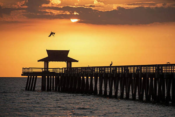 Photograph - A Pelican Dive-bomb At The Naples Pier Naples Fl by Toby McGuire