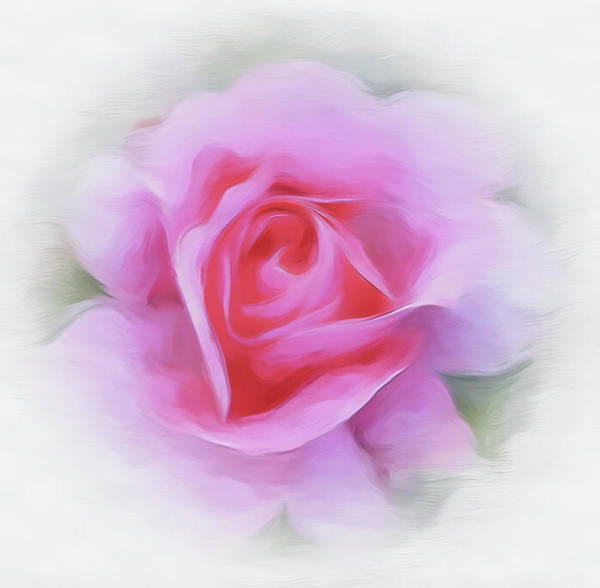 A Perfect Pink Rose Art Print