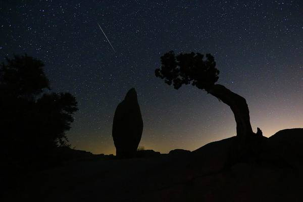 Photograph - A Perseid Meteor Over Lone Juniper And Balanced Rock by M C Hood