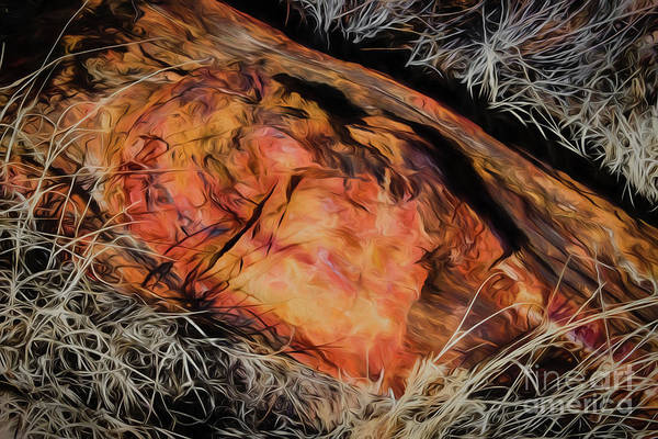 Photograph - A Petrified Petrified Log by Jon Burch Photography