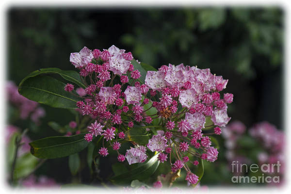 Photograph - A Pink Bunch by Elaine Teague