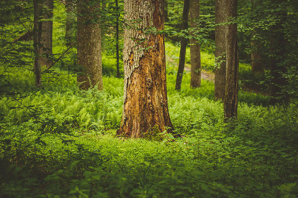 Wall Art - Photograph - A Place In The Woods by Shane Holsclaw