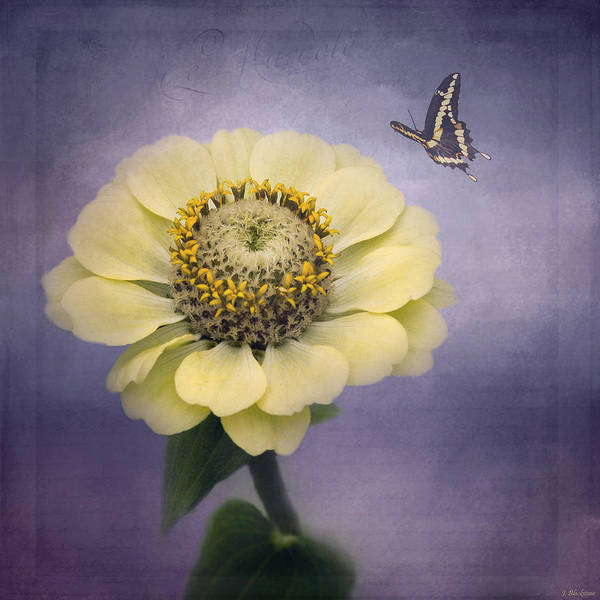 Photograph - A Poem Begins - Flower Art by Jordan Blackstone