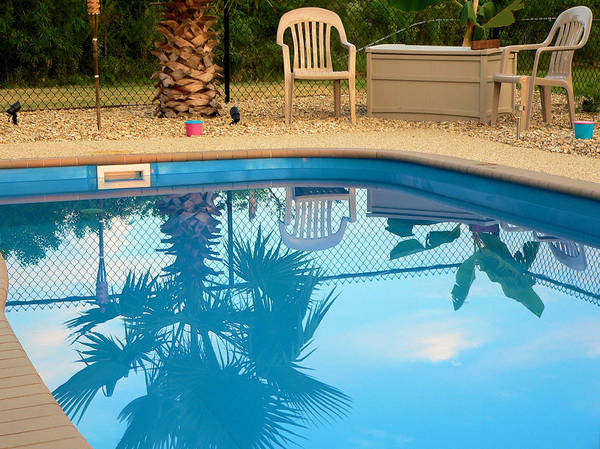 Photograph - A Pool Palm by Kathy K McClellan