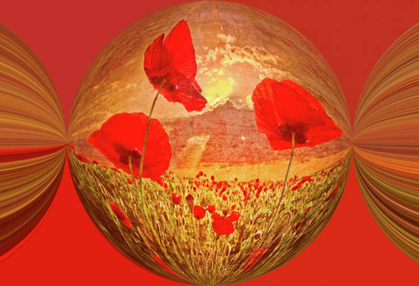 Photograph - A Poppy Kind Of Morning Circles by Debra and Dave Vanderlaan