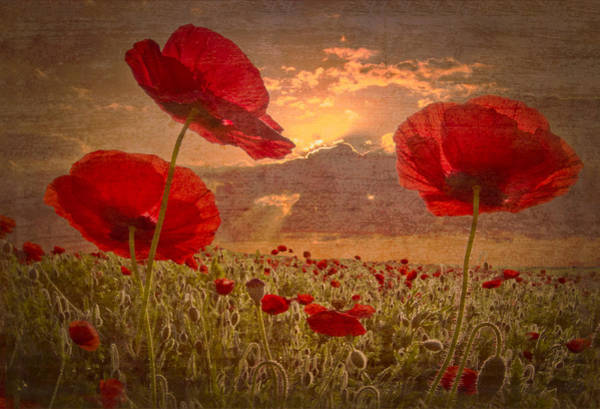 Wall Art - Photograph - A Poppy Kind Of Morning by Debra and Dave Vanderlaan