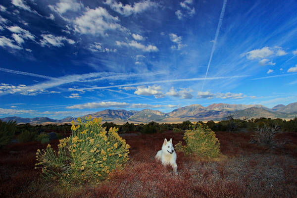 Photograph -  A Portrait In Nature by Sean Sarsfield