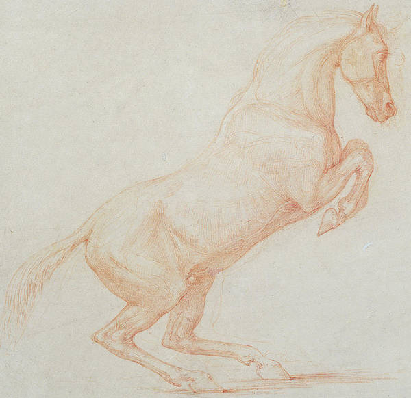 Equestrian Drawing - A Prancing Horse by George Stubbs