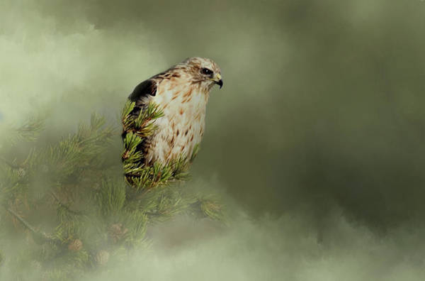 Falconiformes Photograph - A Predators Watch by Lana Trussell