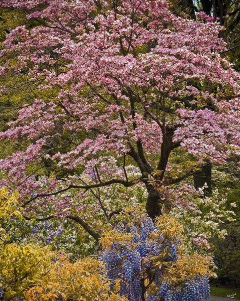 Photograph - A Profusion Of Spring by Chris Lord
