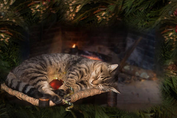 Photograph - A Purrfect Christmas by Robin-Lee Vieira