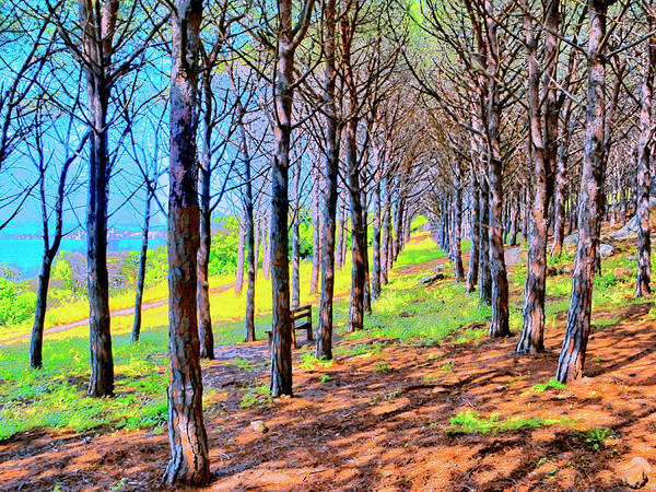 Photograph - A Quiet Grove On Santorini by Dominic Piperata