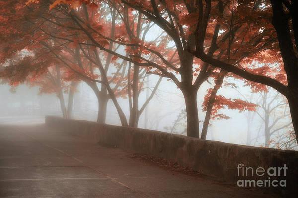 Photograph - A Quiet Place by Patrick M Lynch