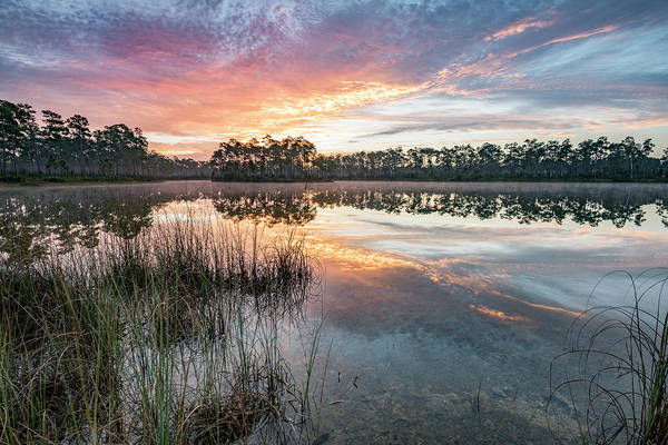 Everglades Photograph - A Rainbow Of Colors by Jon Glaser