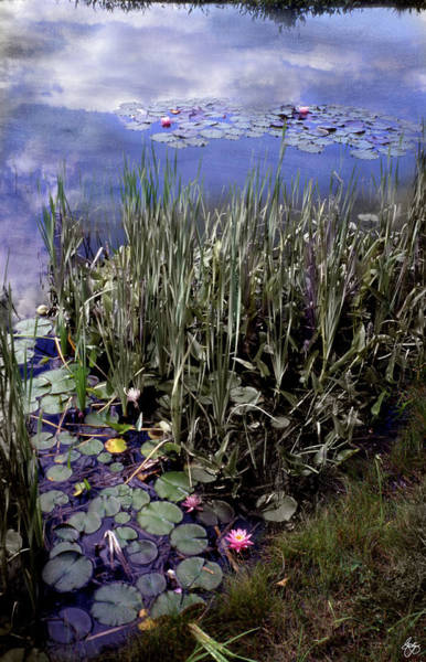 Photograph - A Rainbow Of Water Lilies by Wayne King