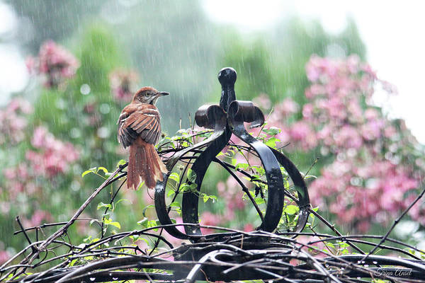 Photograph - A Rainy Summer Day by Trina Ansel