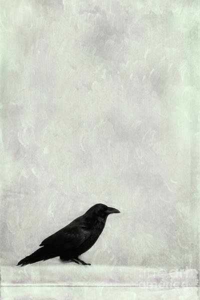 Wall Art - Photograph - A Raven by Priska Wettstein