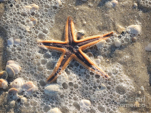 Wall Art - Photograph - A Real Star by Lucyna A M Green