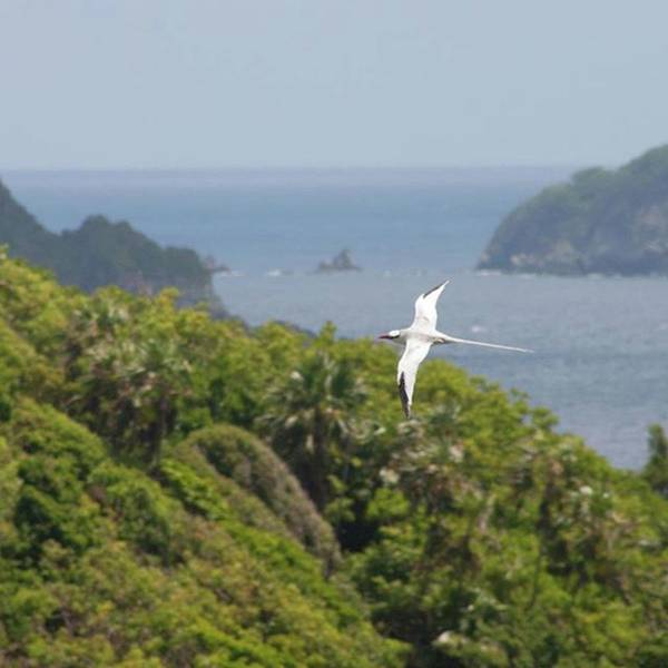 Bird Photograph - A Red-billed Tropicbird (phaethon by John Edwards