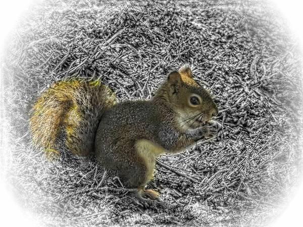 Digital Art - A Red Squirrel Enjoying A Snack by Rusty R Smith