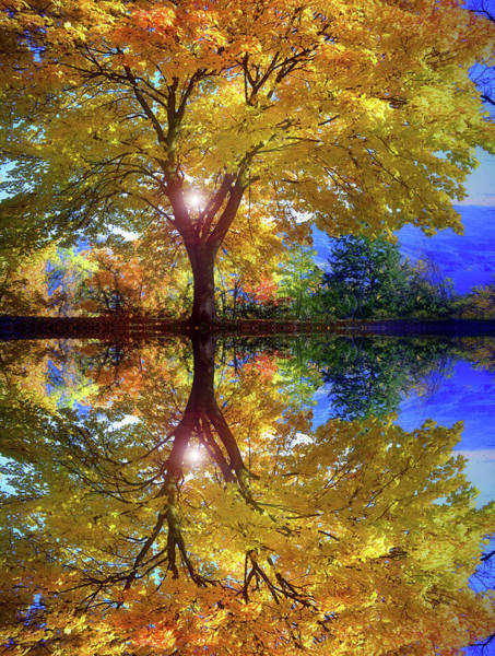 Photograph - A Reflective October by Tara Turner