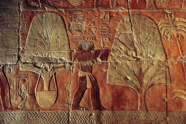 Wall Art - Photograph - A Relief Of Men Carrying Myrrh Trees by Kenneth Garrett