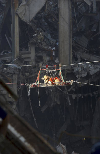 September 11 Attacks Photograph - A Rescue Dog Is Transported by Stocktrek Images