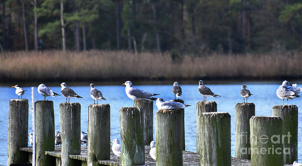 Critters Photograph - A Resting Place by Skip Willits