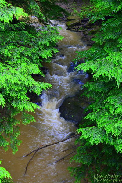 Photograph - A River Runs Through It by Lisa Wooten