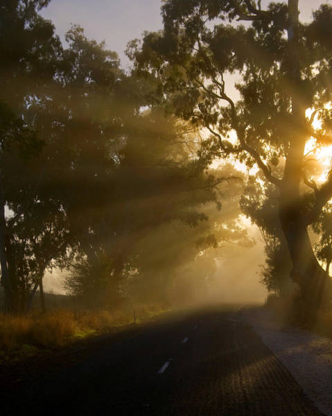 Ray Of Light Photograph - A Road Less Traveled by Mike  Dawson