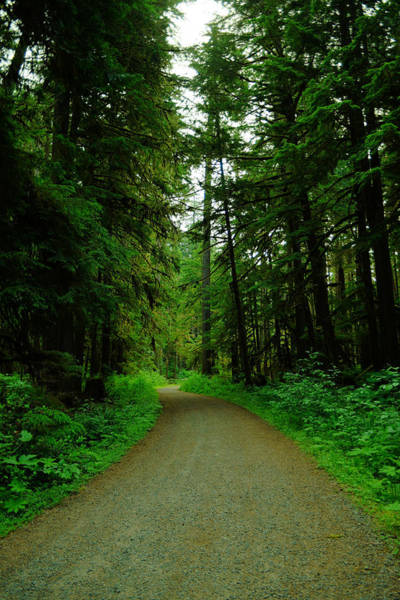 Wall Art - Photograph - A Road Through The Forest by Jeff Swan