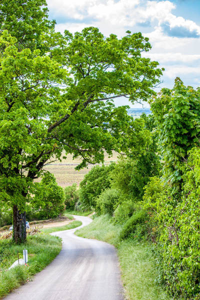 Wall Art - Photograph - A Road To Beaune by W Chris Fooshee