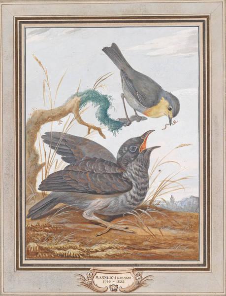 Cuckoo Drawing - A Robin Feeding A Cuckoo by Johann Christian von Mannlich