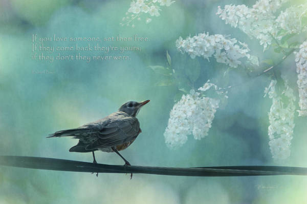 A Robin Sings A Serenade Hanging On A Wire  Art Print