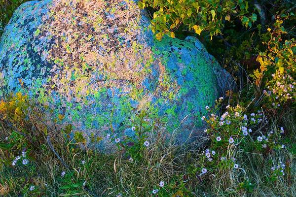 Photograph - A Rock In Maine by Polly Castor