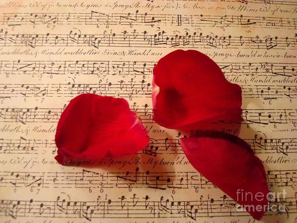 Petal Wall Art - Photograph - A Romantic Note by Kathy Bucari