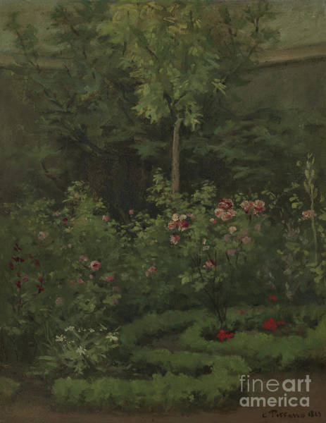 Wall Art - Painting - A Rose Garden by Camille Pissarro