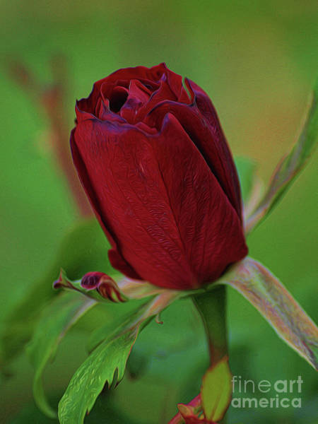 Photograph - A Rose Is A Rose by Vivian Martin