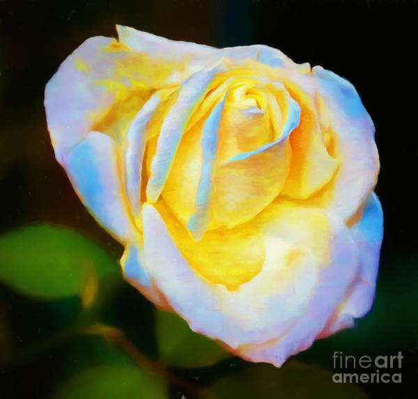 Photograph - A Rose by John Kolenberg
