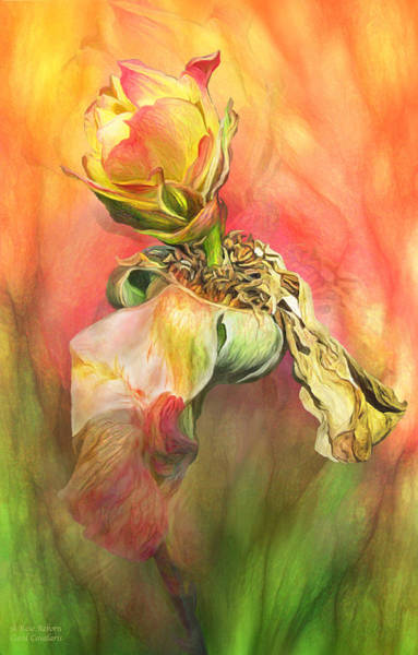 Reborn Wall Art - Mixed Media - A Rose Reborn by Carol Cavalaris